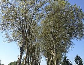 280px-Route_à_Monthieux
